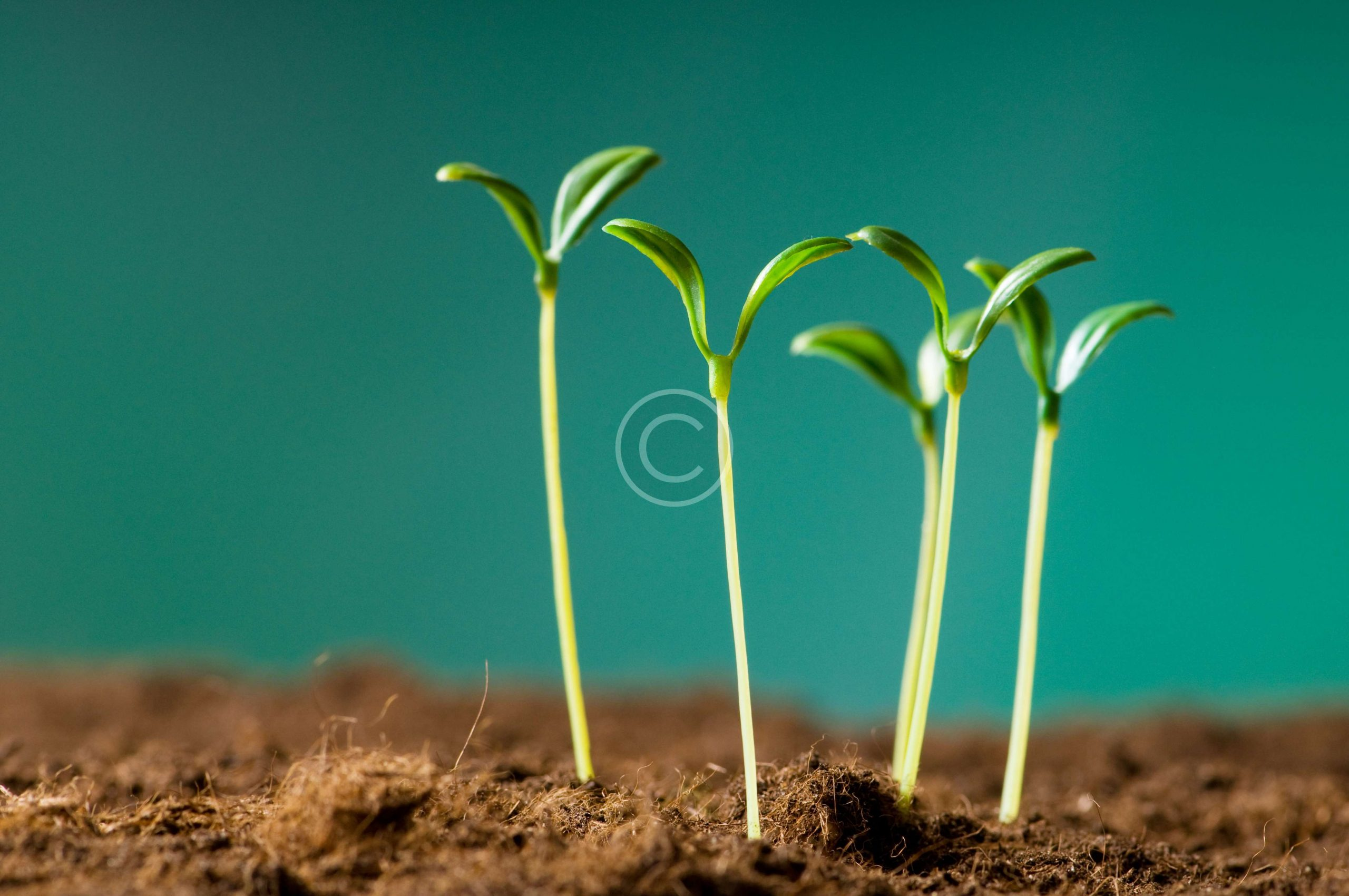 bigstock-Green-seedling-illustrating-co-14319230-scaled