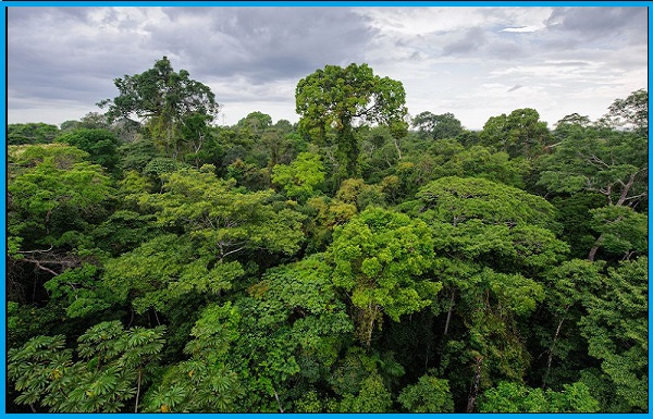 Innovation by Ancient Farmers adds to Biodiversity of the Amazon
