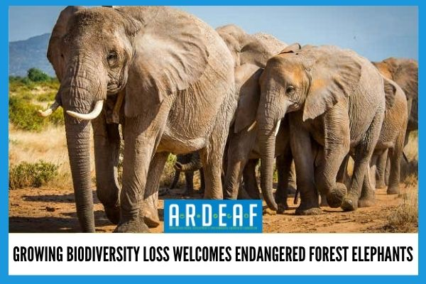 Growing Biodiversity Loss Welcomes Endangered Forest Elephants